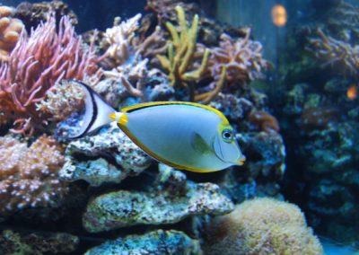 Gdynia-akwarium